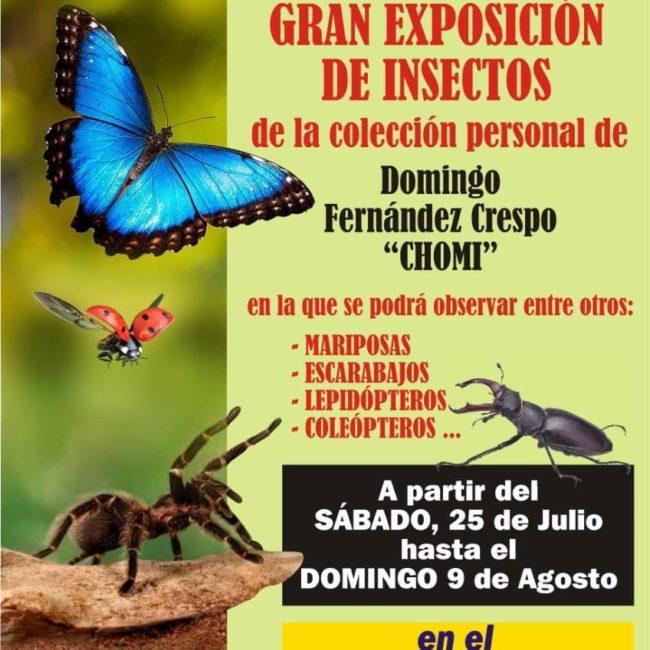 Exposición de insectos
