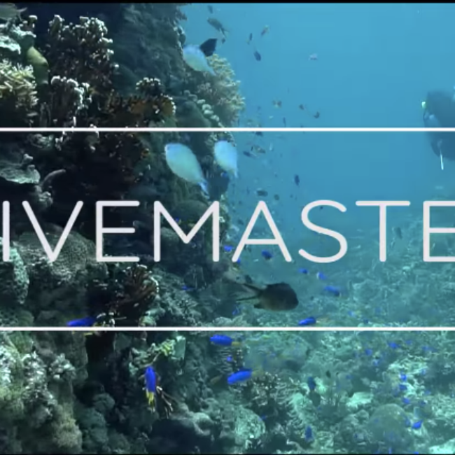 Proyección documental 'Divemaster'